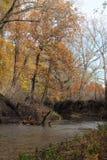 Una curvatura in The Creek Immagini Stock
