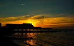 Una danza de la puesta del sol - estorninos Foto de archivo libre de regalías