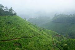 Una de la mayoría de las plantaciones de té de la mucha altitud en Munnar, la India Imagen de archivo libre de regalías