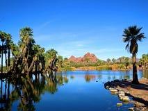 Una de las gemas ocultadas de Arizona, parque de Papago, un oasis del desierto Imagen de archivo libre de regalías