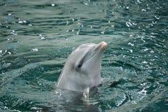 Una demostración con los delfínes fotos de archivo libres de regalías