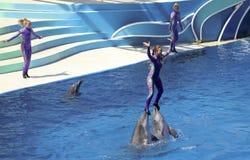 Una demostración de los días del delfín entretiene a visitantes en el Dolphin Stadium imagenes de archivo