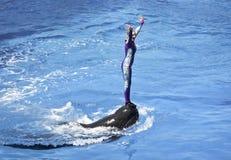 Una demostración de los días del delfín entretiene a visitantes en el Dolphin Stadium fotografía de archivo