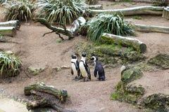 Una disposizione della famiglia nello zoo di Basilea immagini stock