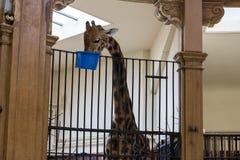 Una disposizione della famiglia nello zoo di Basilea fotografie stock