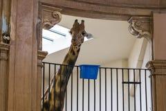 Una disposizione della famiglia nello zoo di Basilea Fotografia Stock Libera da Diritti