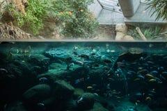 Una disposizione della famiglia nello zoo di Basilea immagine stock libera da diritti