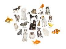 Una disposizione di 22 animali domestici Fotografia Stock Libera da Diritti