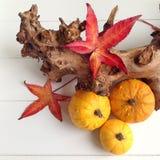 Una disposizione stagionale con le zucche e le foglie rosse immagini stock