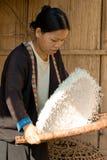 Una donna del riso di pulizia del gruppo etnico di Hmong Immagine Stock Libera da Diritti