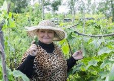 Una donna nel paese fra i cetrioli Fotografie Stock Libere da Diritti