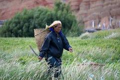 Una donna nepalese va raccogliere le verdure nel giardino con una zappa e un canestro, nel villaggio di Chusang Fotografia Stock Libera da Diritti