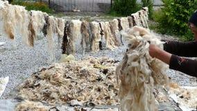 Una donna pulisce la lana del ` s delle pecore, stock footage