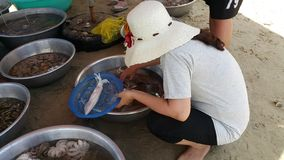 Una donna sta selezionando il calamaro ad un mercato dei frutti di mare sulla spiaggia immagine stock