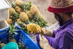 Una donna vietnamita sta pulendo l'ananas nel mercato vietnamita Concetto asiatico di cucina Fotografia Stock