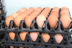 Una dozzina di uova nella cabina che ha venduto nella drogheria Fotografia Stock Libera da Diritti