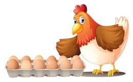 Una dozzina di uova in un vassoio e nella gallina Immagine Stock Libera da Diritti