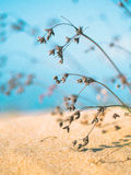 Una duna de arena Imagenes de archivo