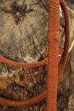 Una ejecución de Bullwhip en un tronco de árbol Imagen de archivo libre de regalías