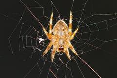 Una ejecución de la araña en su red del Web Imagen de archivo