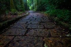 Una entrada empedrada de la capilla de Hakone, en el bosque en Japón fotografía de archivo
