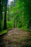 Una entrada empedrada de la capilla de Hakone, en el bosque en un día soleado en Kyoto, Japón foto de archivo