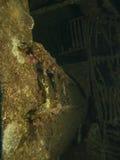 Una escalera cubierta coralina en ruina de la nave imagenes de archivo