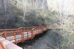 Una escalera larga de madera anaranjada con una barandilla con una ayuda del metal entre abedules verdes en la reserva nacional s Fotos de archivo