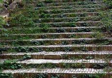 Una escalera vieja, pasos demasiado grandes para su edad con el musgo verde foto de archivo libre de regalías