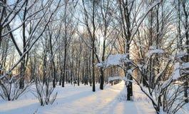 Una escena del parque del invierno. foto de archivo