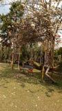 Una escena hermosa Río fotografía de archivo libre de regalías