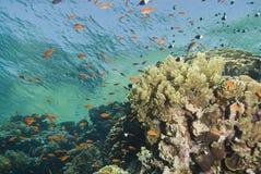 Una escena tropical colorida y vibrante del filón. Imagen de archivo