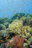 Una escena tropical colorida y vibrante del filón. Foto de archivo
