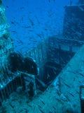 Una escuela de pescados en una ruina Fotografía de archivo libre de regalías