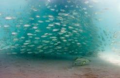 Una escuela de pescados a la baja debajo de un embarcadero imagenes de archivo