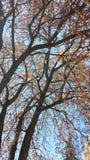 Una esperanza de la primavera Imágenes de archivo libres de regalías