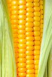 Una espiga de trigo aislada en un fondo blanco imagenes de archivo