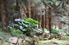Una esquina de un bosque Imágenes de archivo libres de regalías