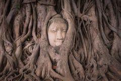Una estatua de Buda del gigante considera hacia fuera sobre Tailandia céntrica la puesta del sol Fotografía de archivo