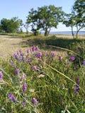 Una estepa, un campo, un estuario 2 Imagen de archivo libre de regalías