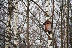 Una estornino-casa en el bosque Fotografía de archivo