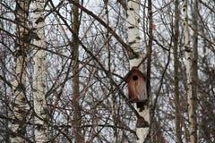 Una estornino-casa en el bosque Imagen de archivo