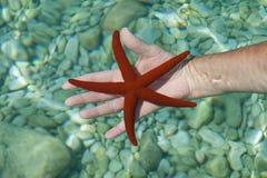 Una estrella de mar roja Imagen de archivo