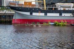 Una famiglia dei cigni passa in nave di navigazione Glenlee al museo della riva del fiume a Glasgow, Scozia fotografia stock