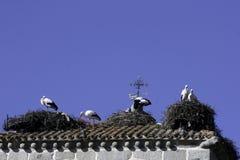 Una famiglia delle cicogne sul tetto di una casa immagini stock libere da diritti