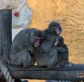 Una famiglia delle scimmie Fotografia Stock Libera da Diritti