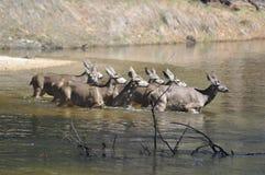 Una familia de ciervos Fotos de archivo