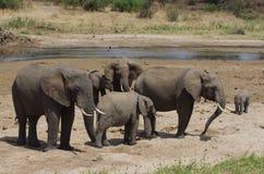 Una familia de elefante africano Imágenes de archivo libres de regalías