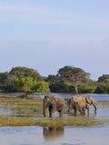 Una familia de elefantes Fotografía de archivo libre de regalías
