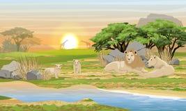 Una familia de leones que descansan cerca de un lago en la sabana africana imagen de archivo